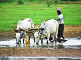 किसानों